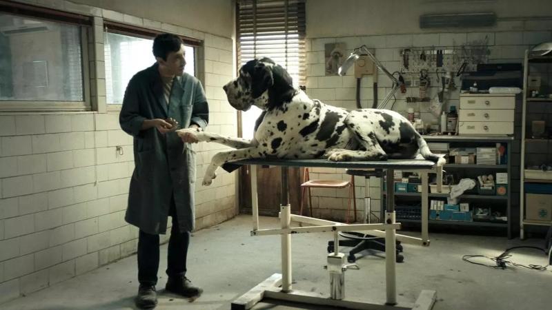 cine italiano - Dogman