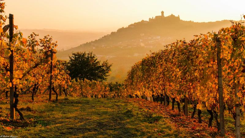 vinos - Santa Vittoria Alba Ok