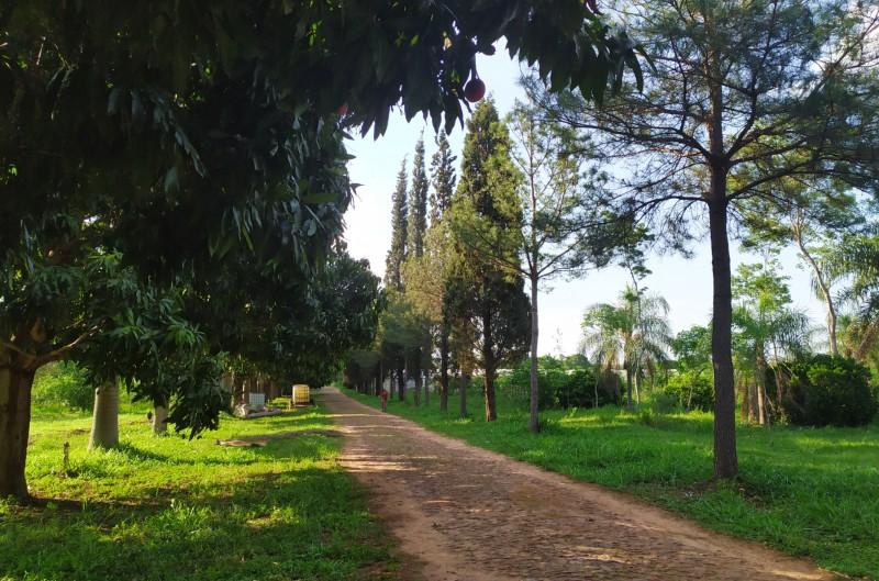 marianela - Caminos Internos