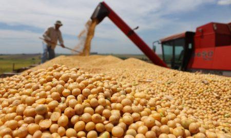 soja en paraguay - Procesamiento De La Soja