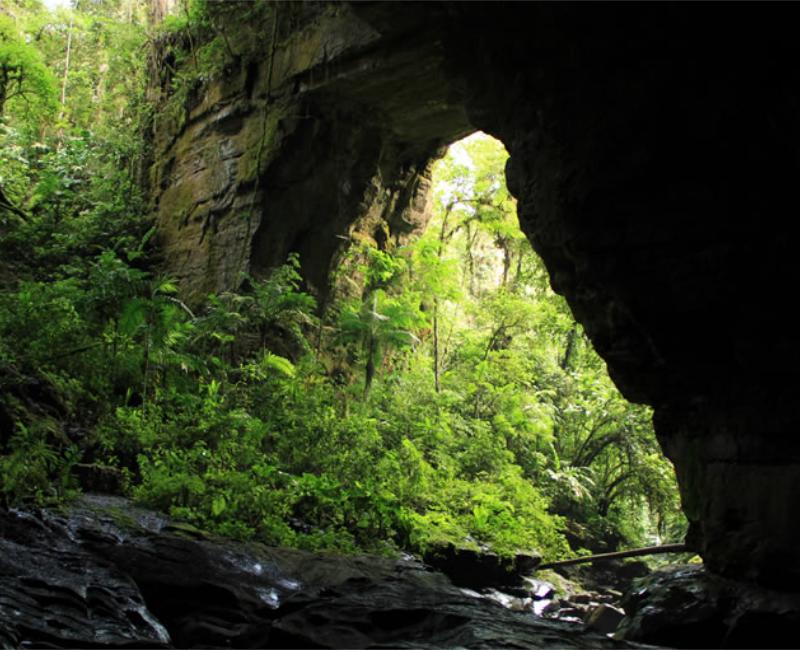 Parque Nacional Natural Cueva de los Guácharos (Cerca a Florencia)