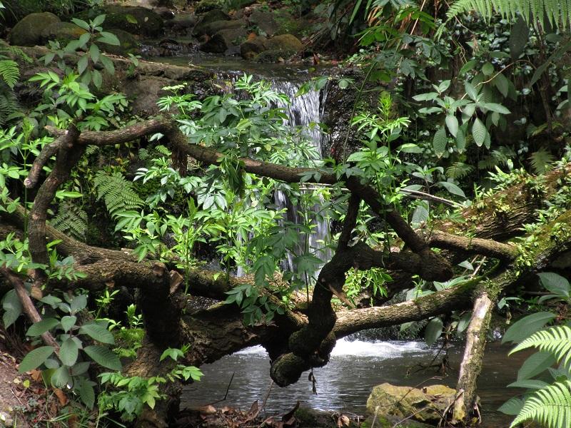 Quebrada la vieja - Cascada