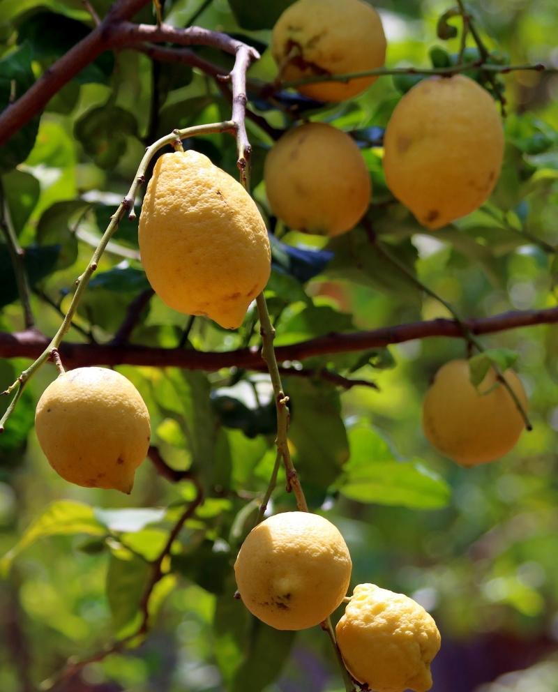 Licores Di Sontti - Limones