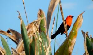 aves - Federal Del Ibera