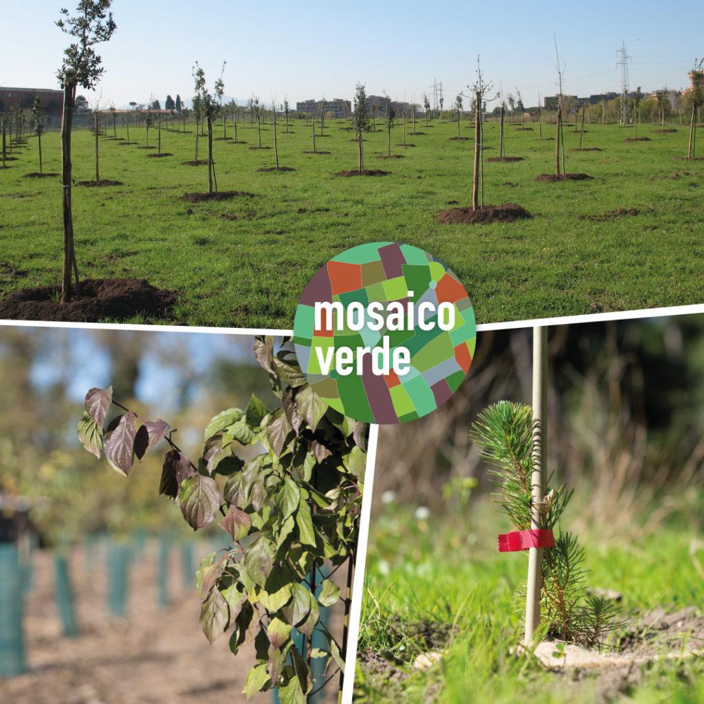 Mosaico Verde e piantumazione di nuovi alberi
