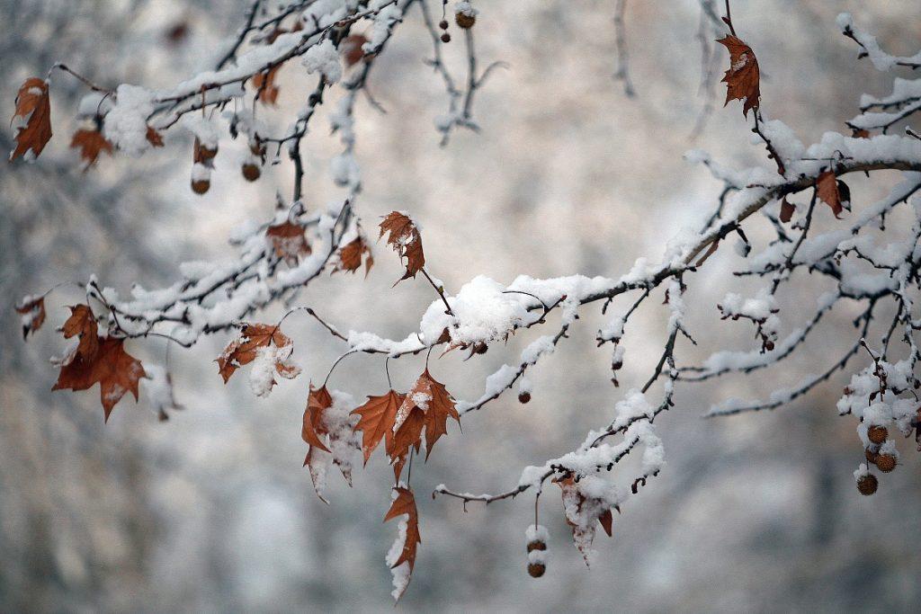ramo pieno di neve