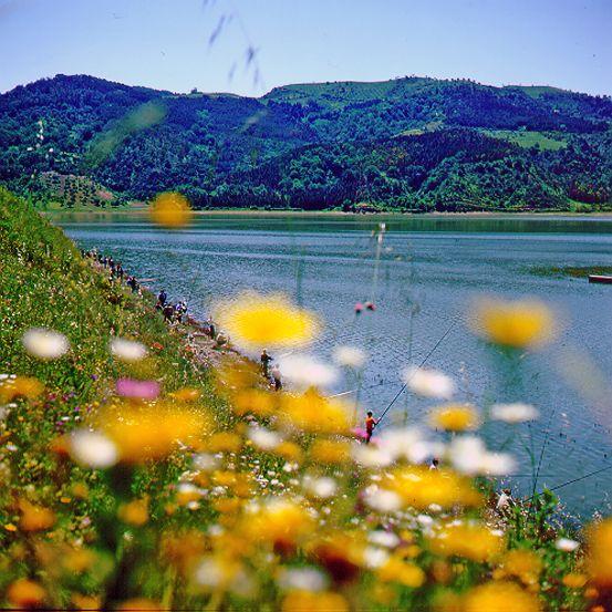 Il Lago Di Tarsia