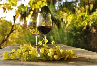 I vini per noi italiani rappresentano un eccellenza. Ogni ragione italiana ha un vino diverso