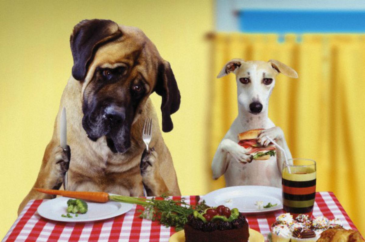 Dieta dopo le feste: consigli utili per smaltire i grassi