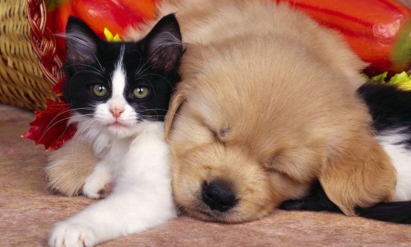 Il rapporto con gli animali domestici non deve essere a senso unico!