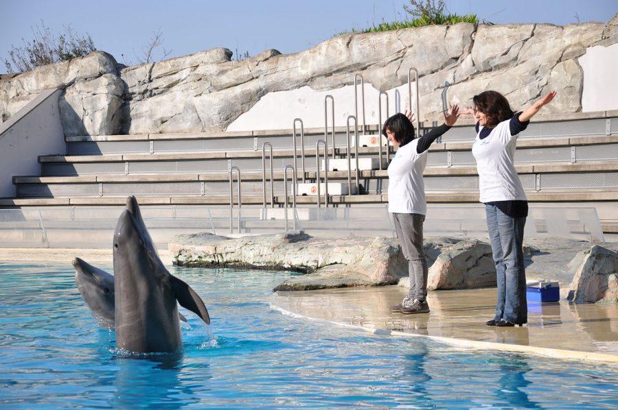 Margherita Cotta, 24 anni, addestratrice di delfini al Parco Oltremare di Riccione