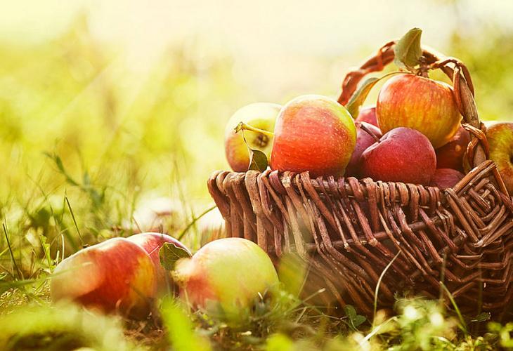 """In viaggio sulla """"strada della mela"""""""