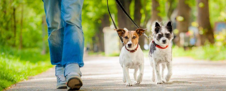 Cecilia ha trasformato la sua passione per i cani in un lavoro