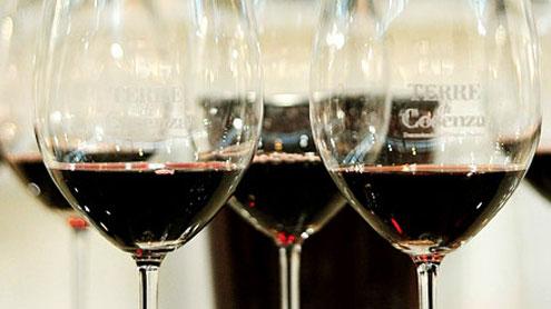 Cosenza: una terra di pregevoli vini