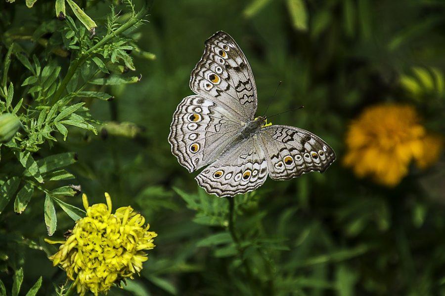 Una start up che produce cosmetici prodotti con il bozzolo delle farfalle