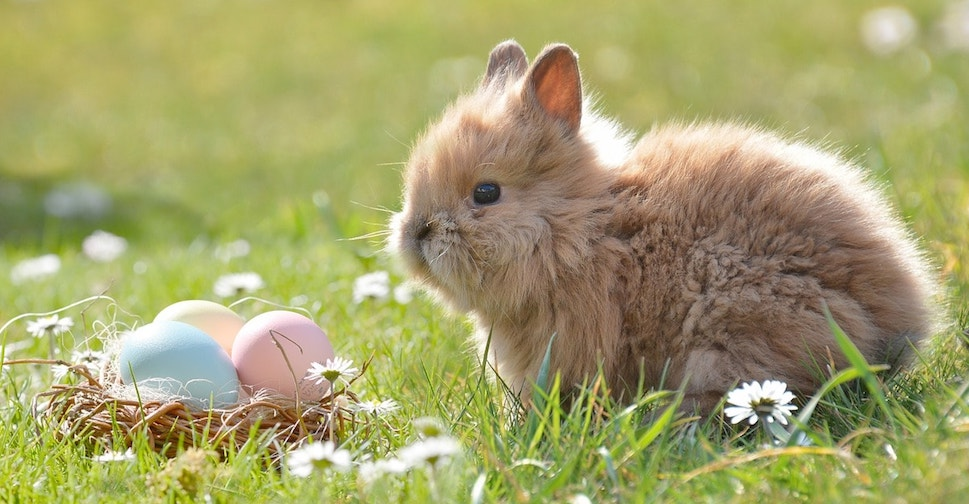 La Pasqua, coniglio e cesto di uova colorate