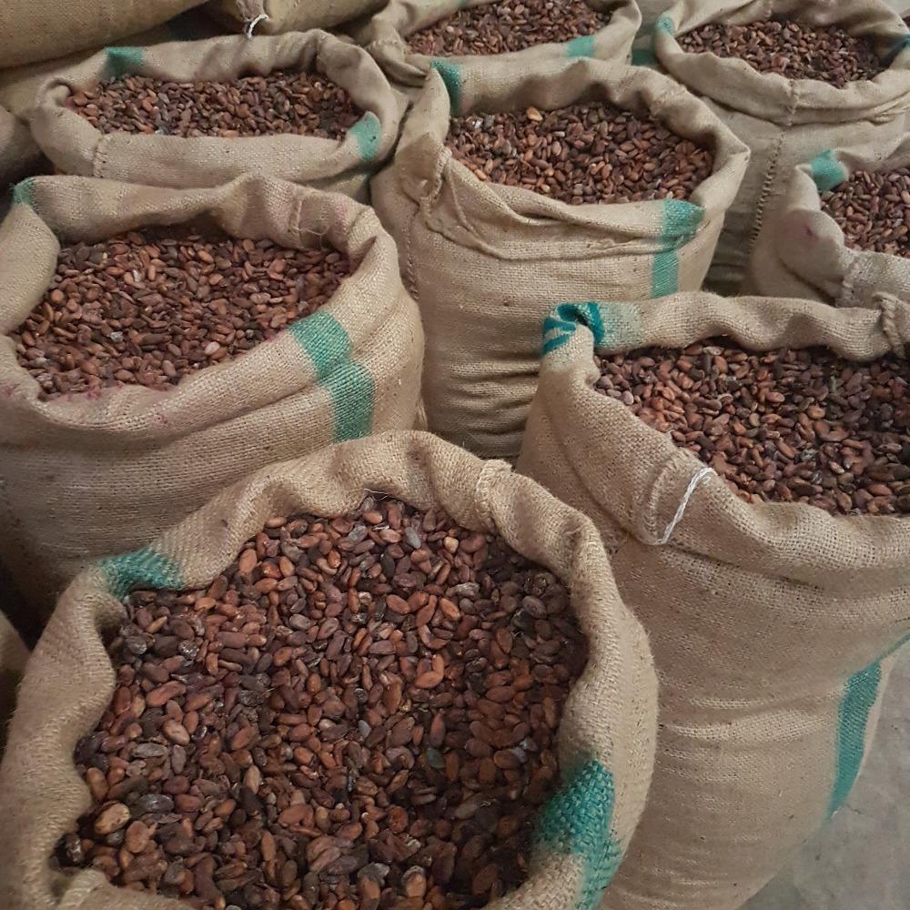 Giornata mondiale del cioccolato - Fave di cacao torrefatte