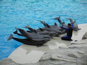 oltremare - spettacolo dei delfini