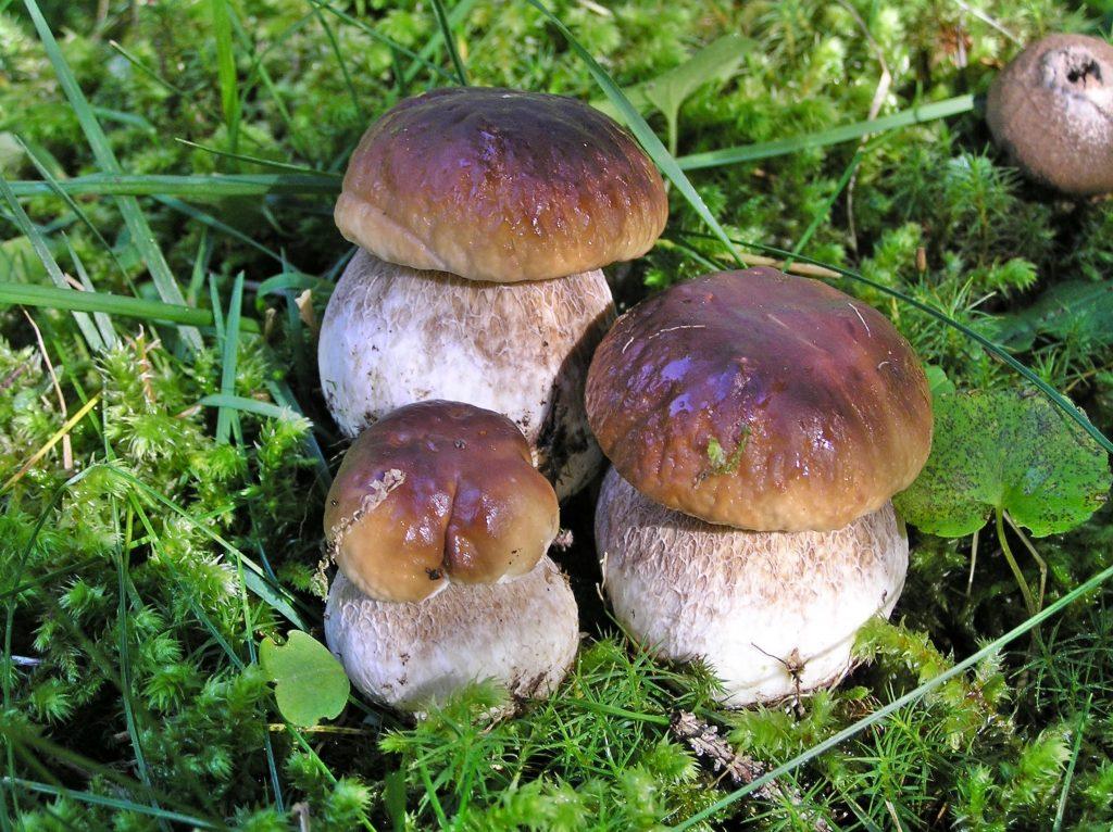 sagra del fungo di Serra San Bruno