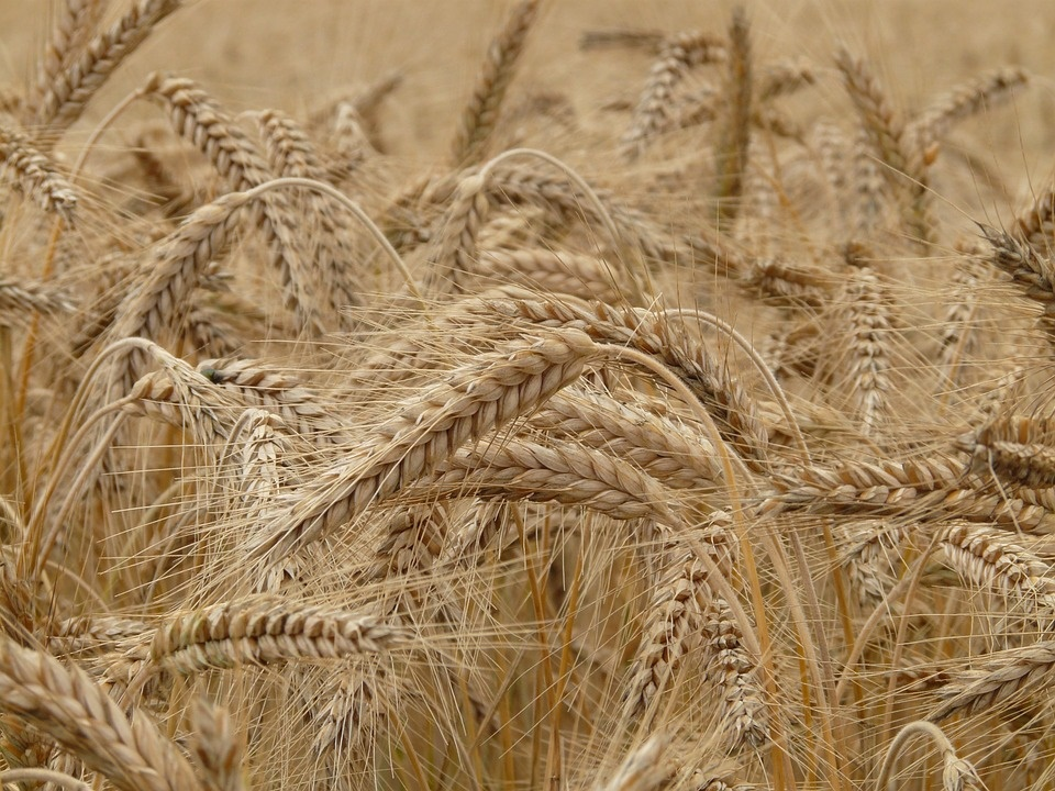 saiwa Italian turning - image of wheat