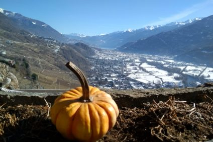 panoramas of the Valtellina - landscape with pumpkin in the foreground