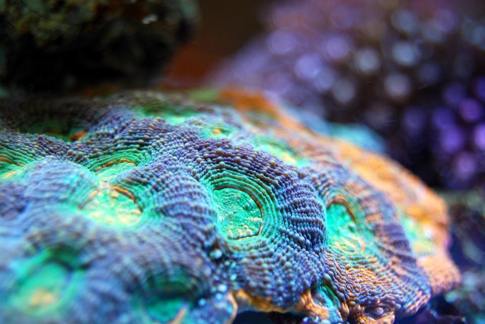 monopoli: barriera corallina