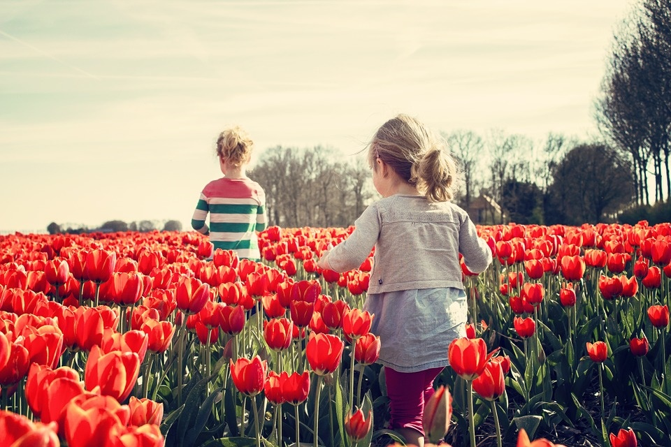 tulipark - image of tulip field with children playing