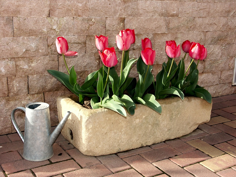 Tulipark - Image of potted tulips