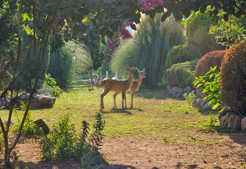 The Secret Garden welcomes animals of all kinds