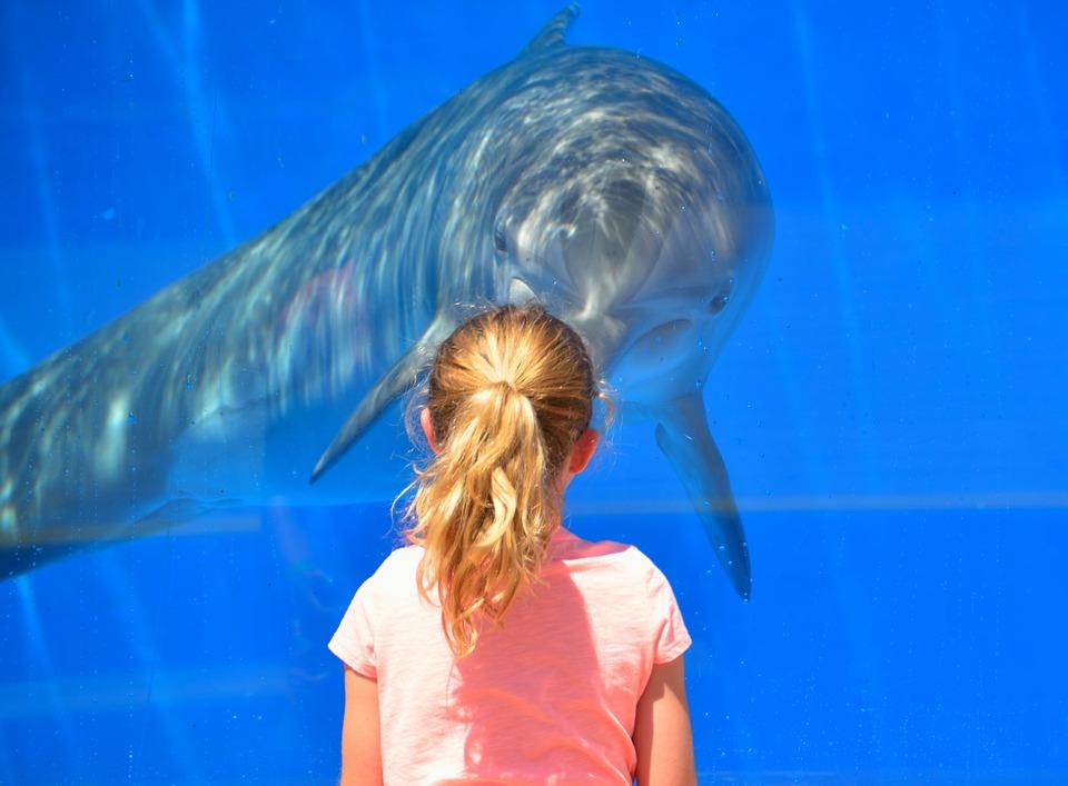 l'acquario di Genova con delfino