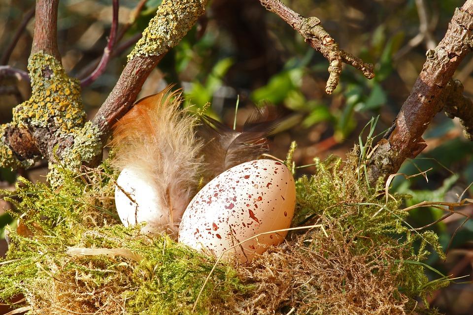 l'uovo simbolo di vita nelle religioni pagane