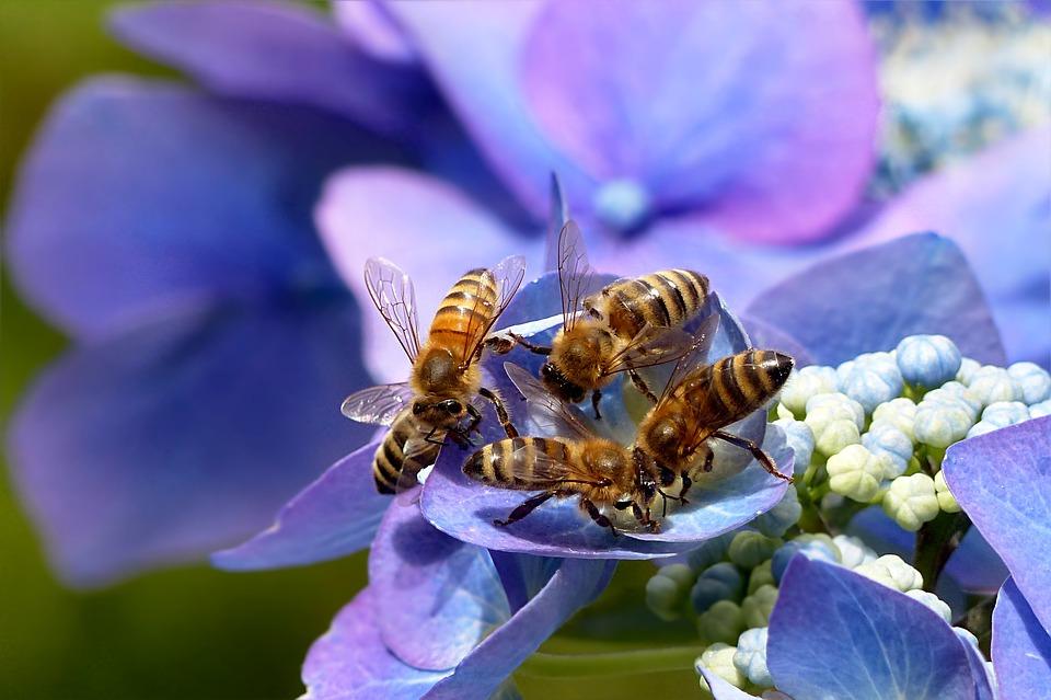 Apepak - bees that feed on nectar