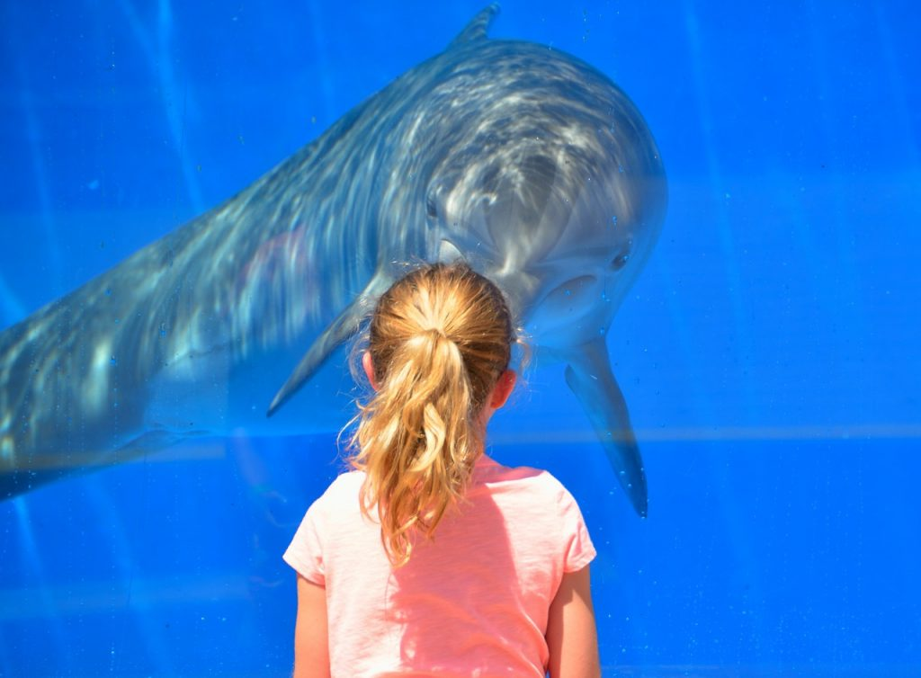 Aquarium of Genoa - Little girl watching a dolphin
