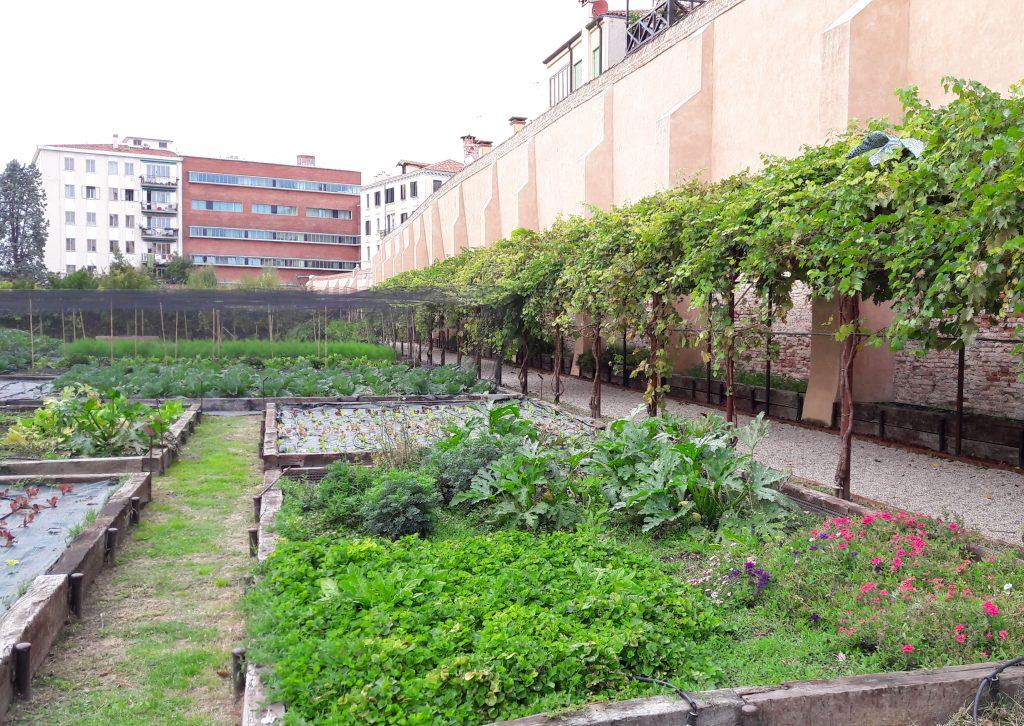 Aiuola delle erbe officinali nel giardino dei carmelitani scalzi