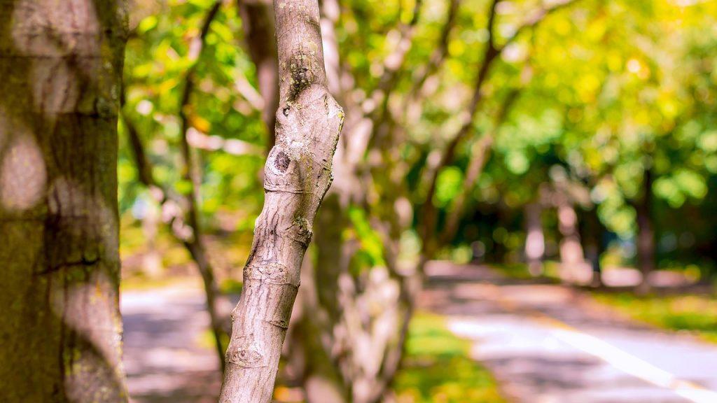 tree of the five senses Park