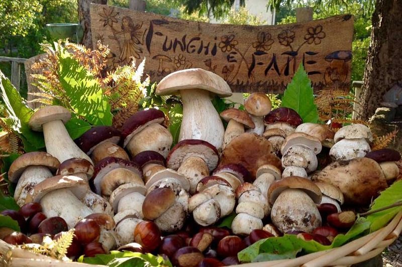 Funghi porcini raccolti nei boschi italiani