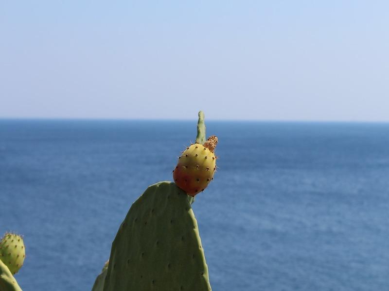 Immagine di fichi d'india su sfondo marino in Salento