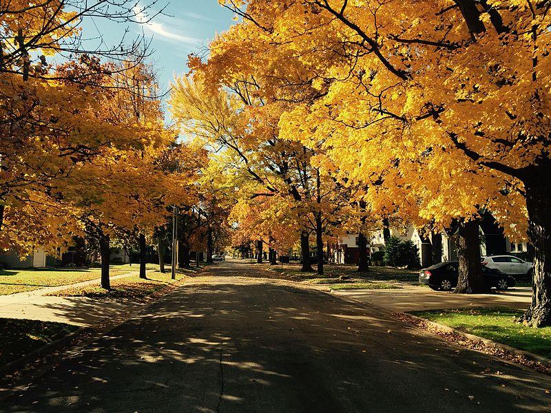 gnocchi-autumn landscape