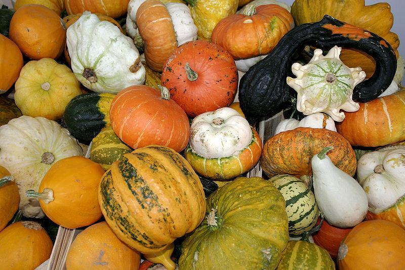 gnocchi- pumpkins