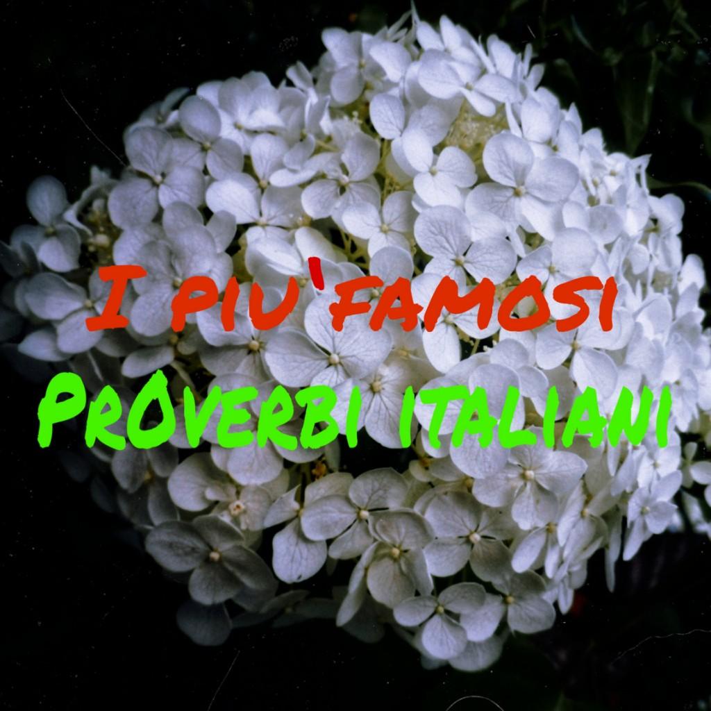 mazzo di fiori con scritta: i proverbi italiani più famosi -