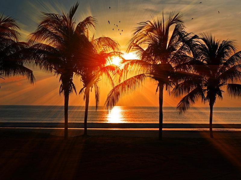 Palme di Miami Ph Pexel