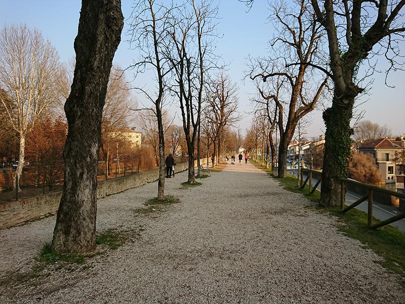 Un tratto delle mura cinquecentesche fiancheggiate da alberi