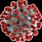 cellula del coronavirus
