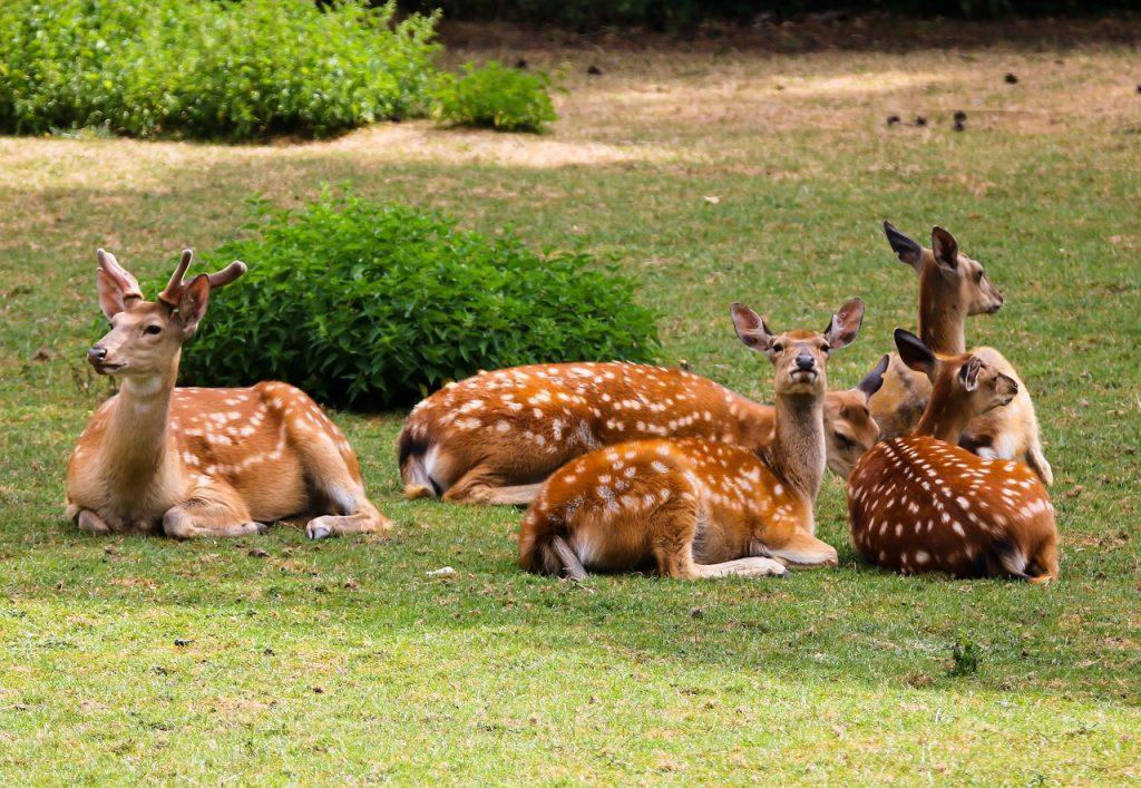 Il pianeta - alcuni cervi seduti sull'erba - planet  - deers sitting on the grass