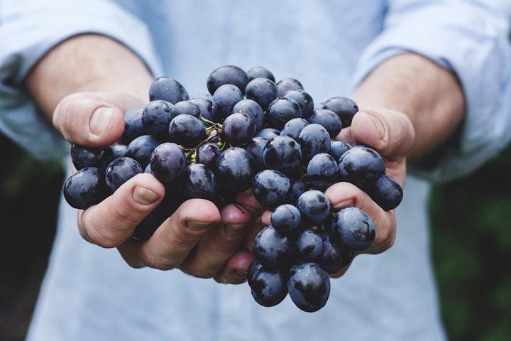 la cosentina - uva nera nelle mani