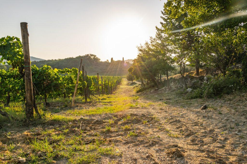 Percorsi - vigneti - nature trails - vineyards