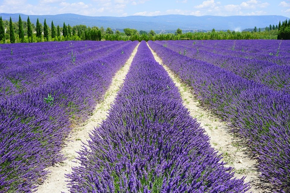 Una strada di lavanda tra le regioni italiane - A road of lavender between the Italian regions