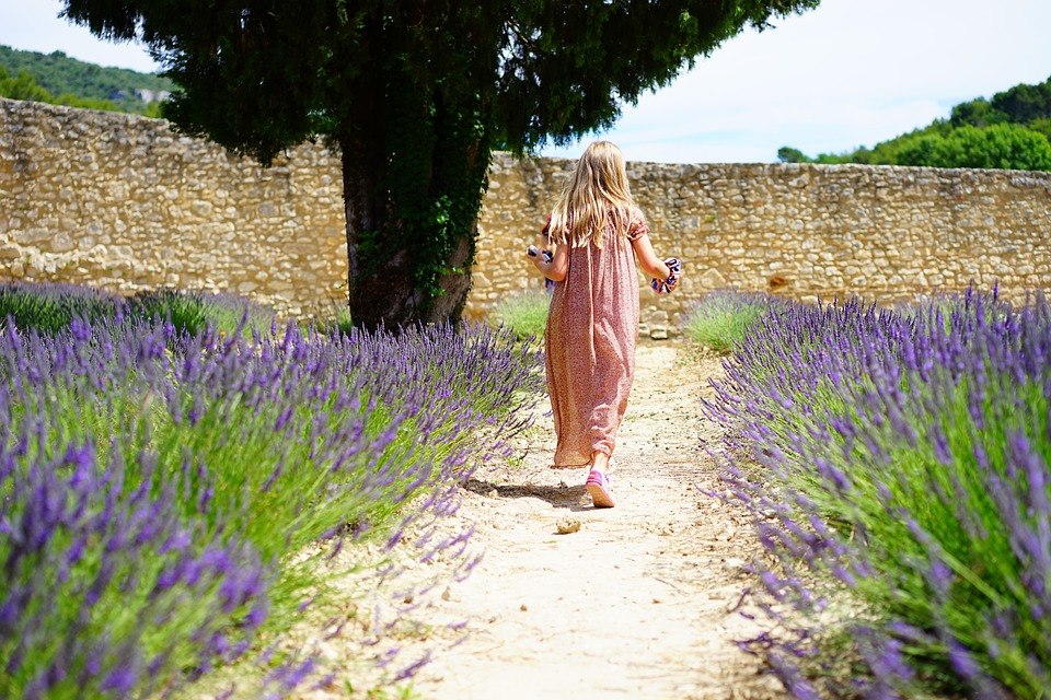 Una strada di lavanda caratteristica . A characteristic lavender road