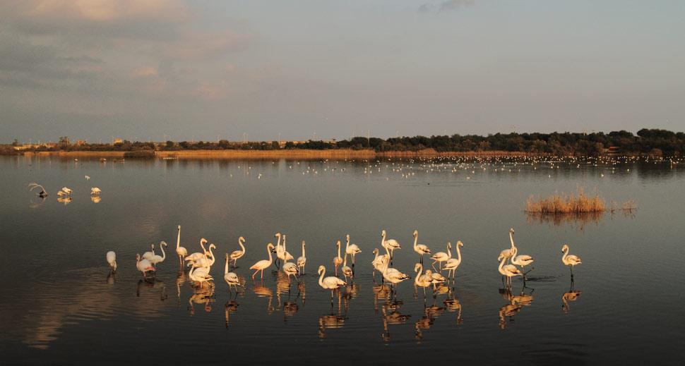 La riserva Saline di Priolo in provincia di Siracusa / The Saline di Priolo reserve in the province of Syracuse