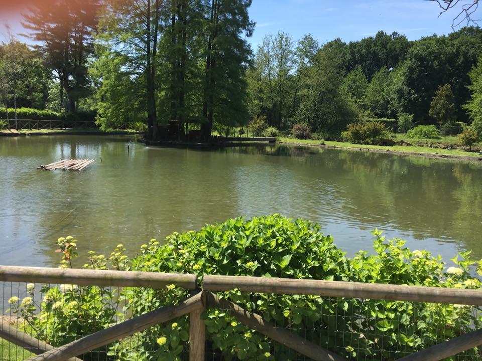 Il lago - lake